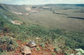 giant tortoises on the rim of Volcano Alcedo